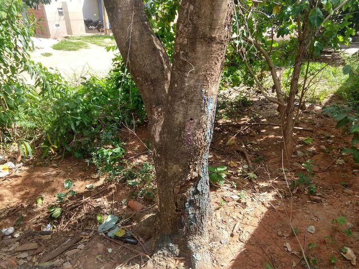 Árvores danificadas para que morram