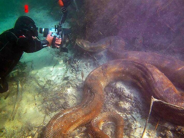 Mergulhadores estrangeiros captam imagens subaquáticas de sucuri