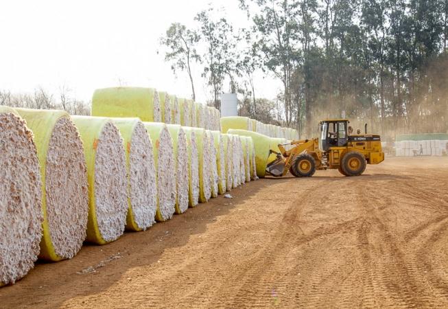 Algodão produzido em Mato Grosso do Sul