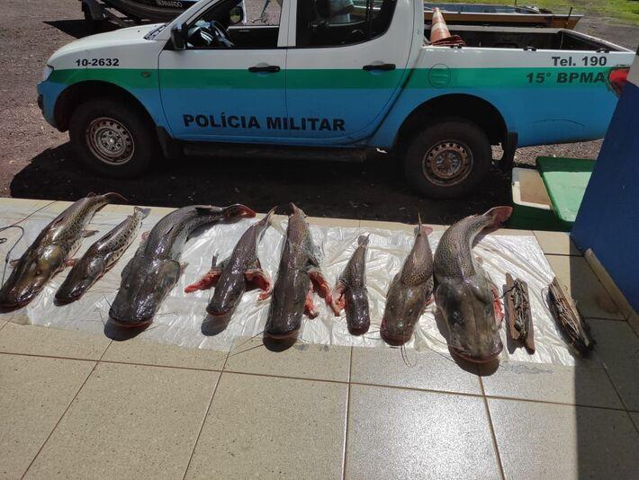 Peixes apreendidos na operação