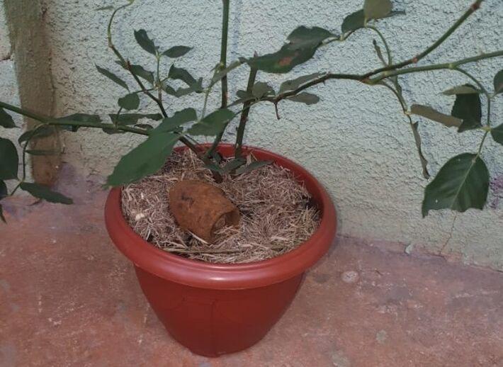 Bomba em vaso de planta