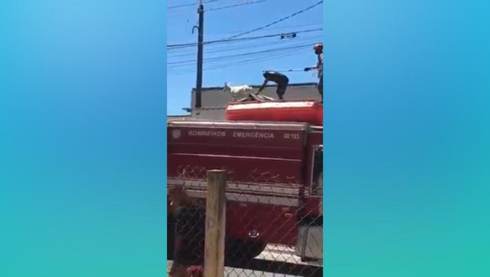 Bicho foi resgatado sobre telhados
