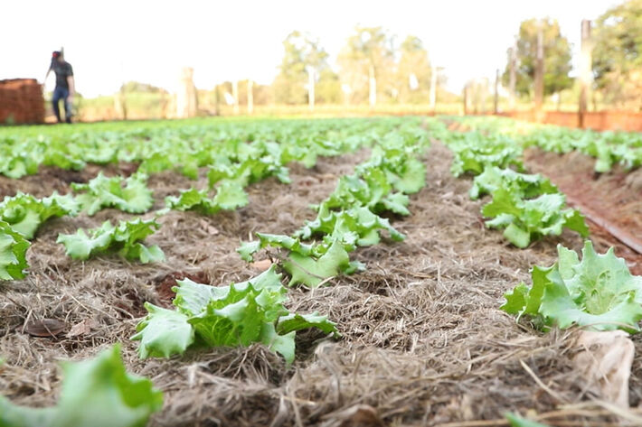 Análises laboratoriais, cobertura e adubação são algumas das ações iniciais da ATeG em propriedades rurais.