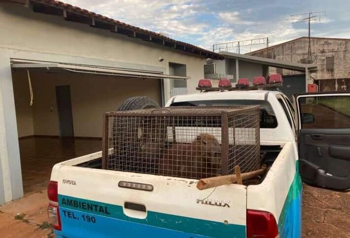 Animal capturado.