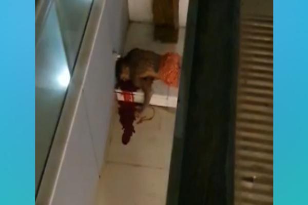 O corpo de Mc Kevin ao lado de fora do prédio na Barra.
