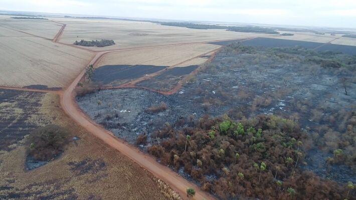 Destruição provocadas pelas queimadas no interior de MS.