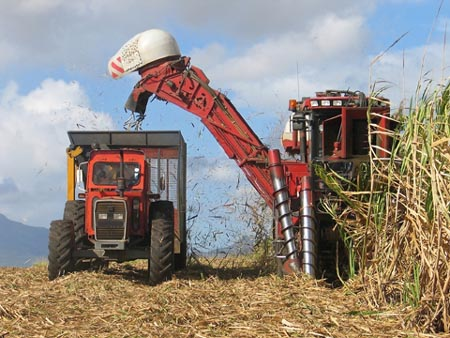 Colheita de cana-de-açúcar<br />Foto: Divulgação