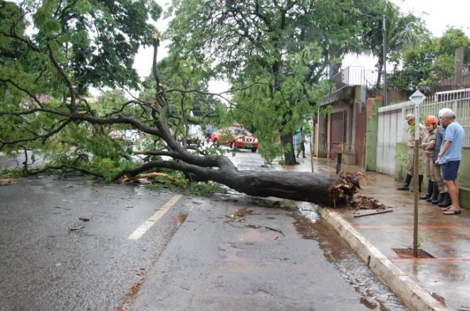 A Defesa Civil registrou quatro quedas de árvores: Avenida Mato Grosso, em frente a UBSF 26 de Agosto (bairro São Francisco), Rua Calógeras e na Rua José Antônio (entre ruas Maracaju e Cândido Mariano).