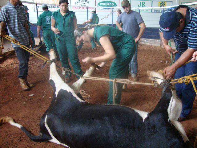 Sindicato Rural oferece Curso de Casqueamento Bovino<br />Foto: CaarapoNews