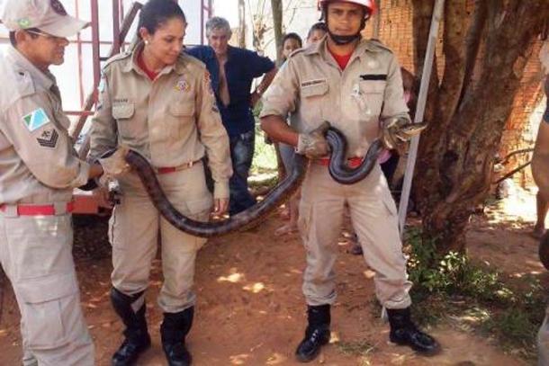 Foto: Ta na Mídia Naviraí