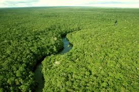 """A vice-secretária de Produção Rural do Amazonas, Sonia Sena Alfaia, disse à<strong>Agência Brasil</strong>que o projeto envolve desde o apoio à atividade agrícola nas terras indígenas, passando pelo escoamento da produção. """"Sabemos que não adianta s"""