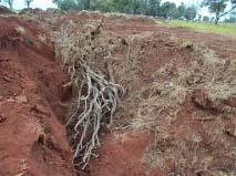 Área com desmatamento ilegal<br />Foto: Divulgação