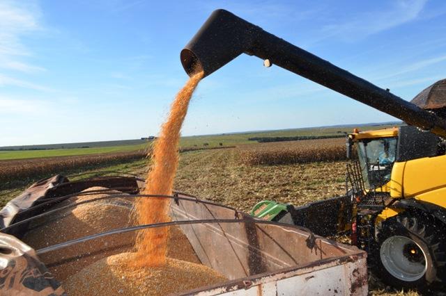 """</p> <p style=""""text-align: justify;"""">O plantio de soja foi concluído no Estado, com 2,3 milhões de hectares de plantada na safra 2014/2015, um aumento de 5% se comparado ao ciclo anterior. As informações são da Aprosoja (Associação de Produtores de Soja"""