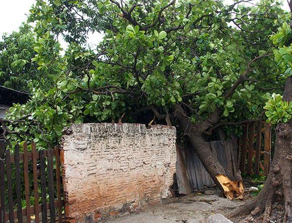 Árvore caiu em c ima de muro no município<br />Foto: Diário Corumbaense