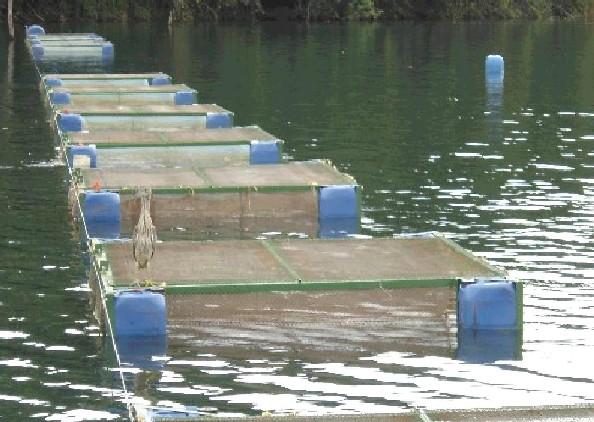 Criação de peixes em cativeiros<br />Foto: Divulgação