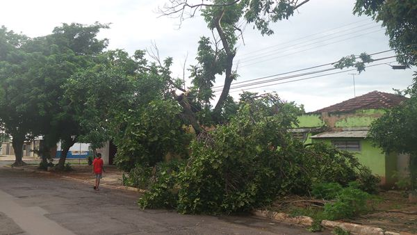 Árvore caída na rua Tenente Tinoco<br />Foto: Heloísa Lazarini