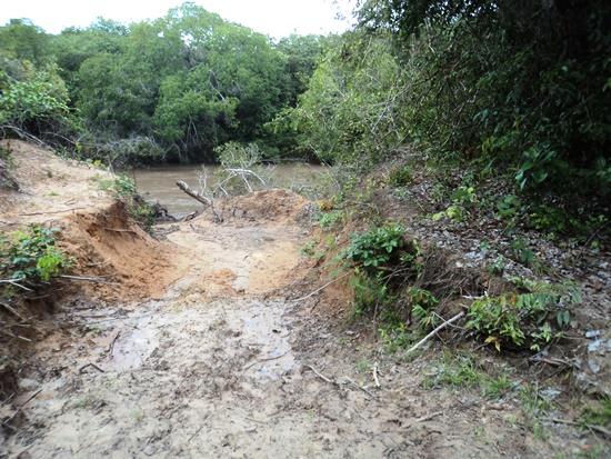 Desmatamento de mata ciliar em Coxim