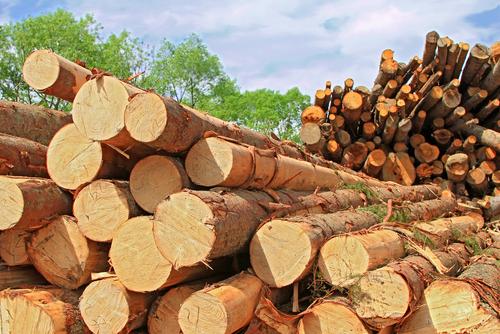 Principal destino da madeira brasileira é os EUA