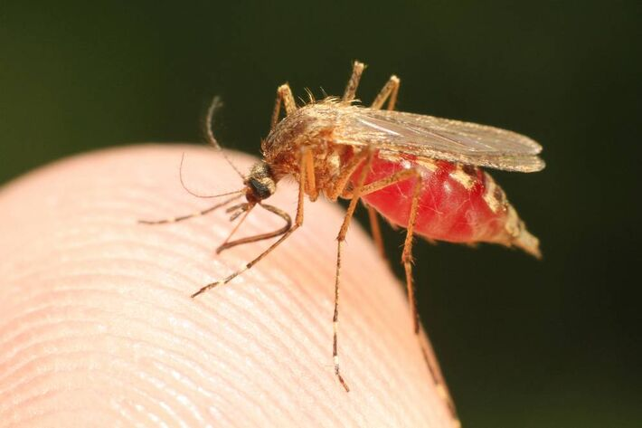 A mutação do Plasmodium falciparum, um dos parasitas causadores da malária, foi identificada em cinco países – Camboja, Laos, Tailândia, Vietnã e Mianmar – onde casos da doença resistiram aos tratamentos