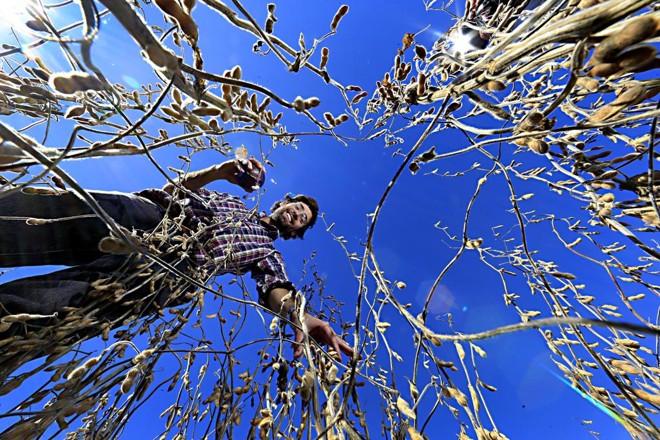 Agricultor realiza colheita da soja no Uruguai, na região de Mercedes