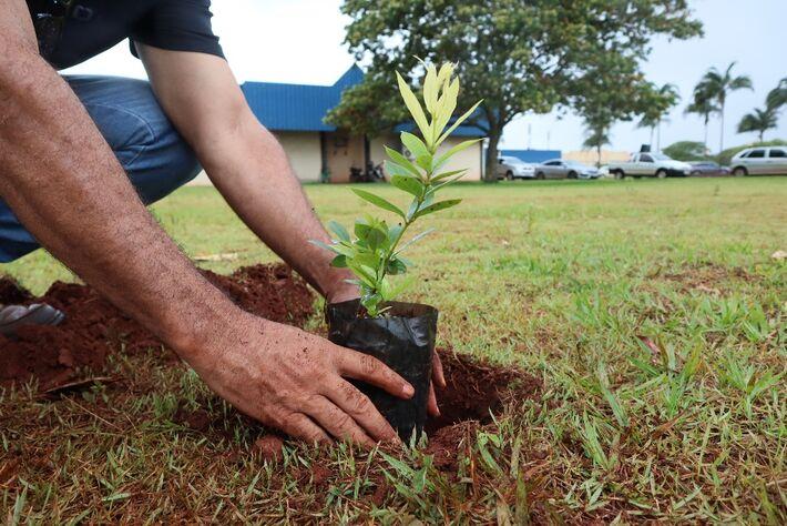 A prefeitura de Dourados já começou o plantio de três mil mudas de Guavira nos parques e praças públicas