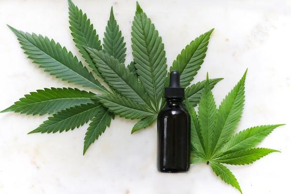 Planta de 'Cannabis sativa', da qual é possível extrair o canabidiol