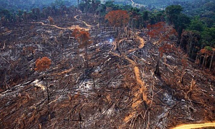 Pesquisa do Imazon mostra que desmatamento foi maior entre municípios na área de influência da usina Belo Monte