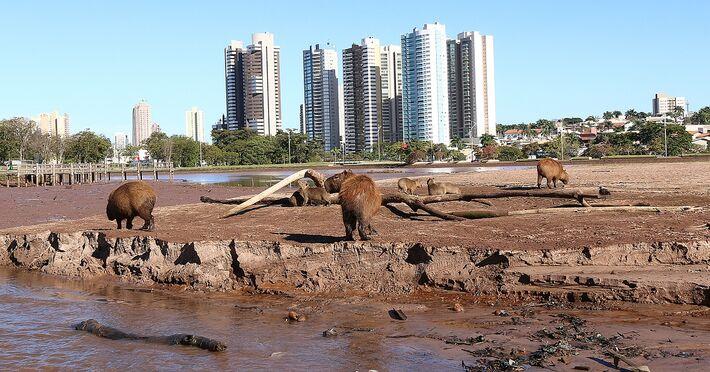 Com desmatamento do Parque, cenas como essa, animais sem comida e lago vazio poderão ser mais frequentes