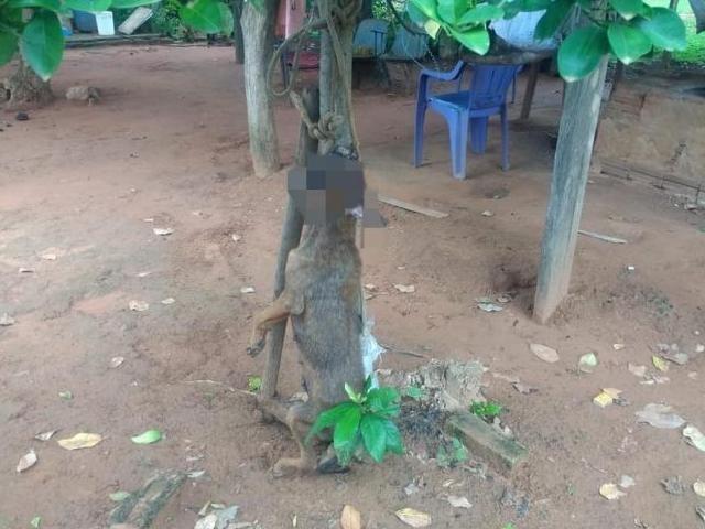 Cadela de estimação foi amarrada em árvore