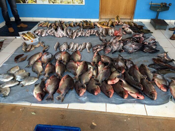 Pescado apreendido em operação