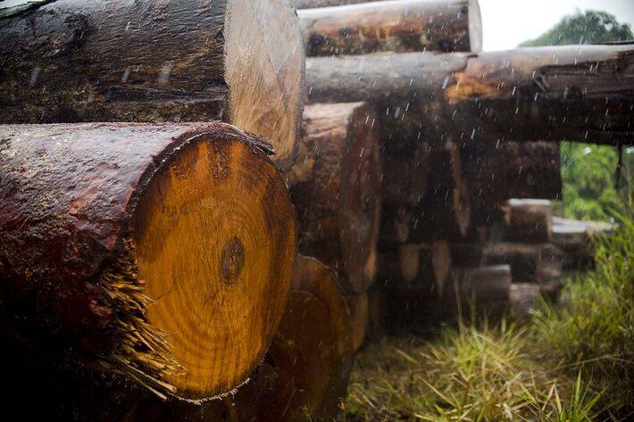 A indústria madeireira é o principal setor econômico de Colniza, o município que mais desmata em Mato Grosso