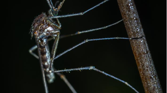 Linhagem vem da África e pode originar nova epidemia
