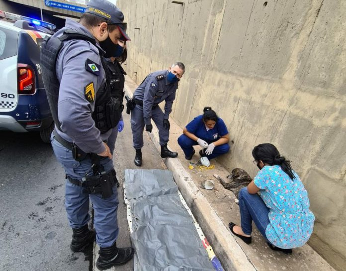 Policiais passavam no momento do crime e socorreram a cadela imediatamente