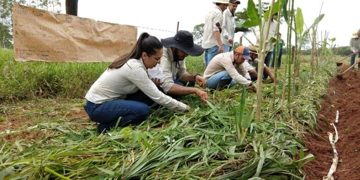 Estado tem 70 mil agricultores familiares entre assentados, quilombolas e agricultores tradicionais